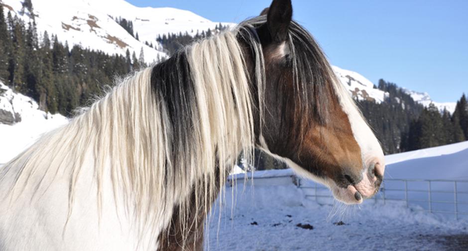 Biobauernhof Pferd | Organic Farm Horse